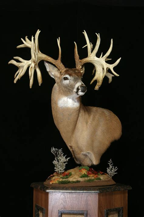 Records Missouri Missouri Monarch The World Record Non Typical Whitetail Buck