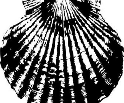 Kerang Laut Koleksi Fox Seashell bintang laut shell vektor vektor misc vektor gratis gratis
