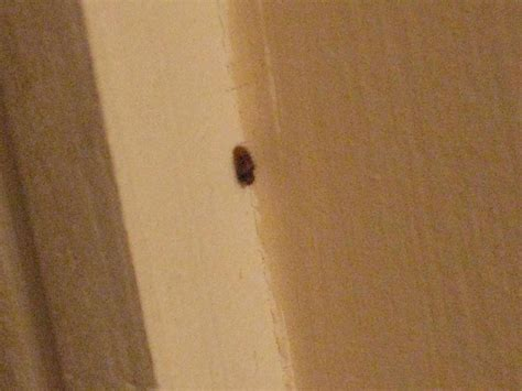 Fuzzy Bathroom Bugs What Of Quot Bug Quot Is This Color Bathrooms Cold
