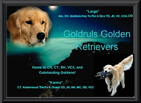 golden retriever chattanooga golden retriever puppies ga