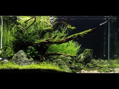 aquascaping ada ada 90p quot rocky shore quot aquascape maintenance proscape