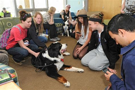 colleges that allow dogs why pets should be allowed everywhere vetdepot