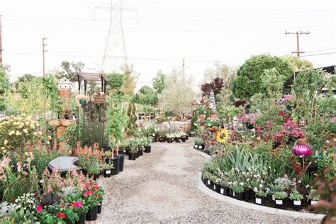 about us glendora gardens nursery