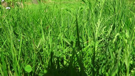 Landscape Diversity Definition Suburban Lawn Definition Lawn Xcyyxh