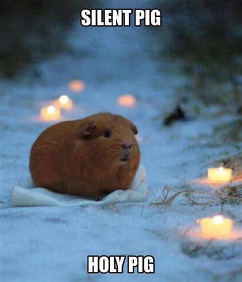 Pig Meme - a lonely guinea pig memes lol