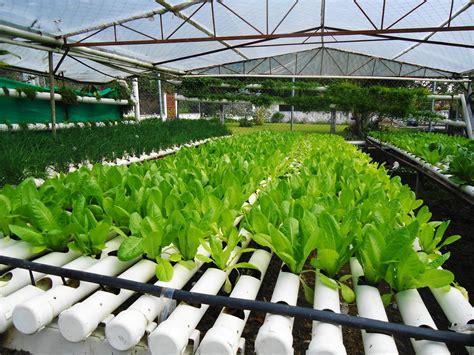 cara membuat hidroponik tanpa greenhouse inilah resiko dan keuntungan hidroponik tanpa greenhouse