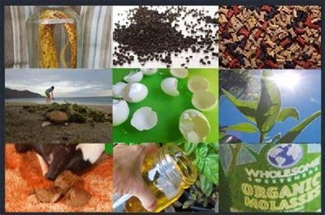 diy tomato fertilizer 10 fertilizer recipes organic transitions