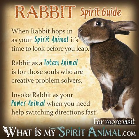 rabbit symbolism meaning spirit animal totem power