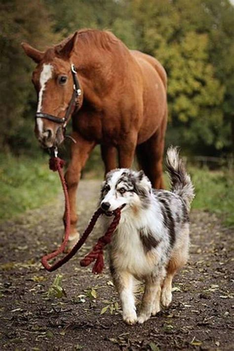 puppies and horses top 10 dogs and horses friends for
