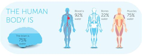 hydration water 8 glasses per day is a myth the about hydration