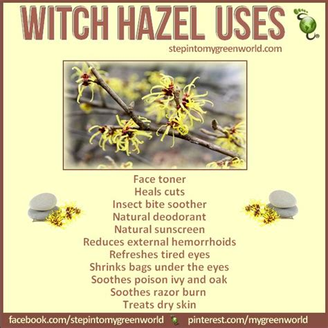 witch hazel hair growing do you use witch hazel it has many medicinal benefits