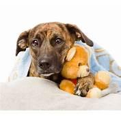 6 Pets Who Feel As Sick A Dog  Sandstone Animal Hospital