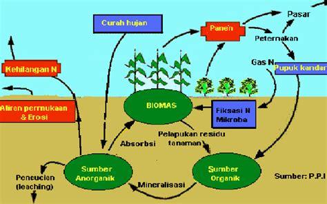 Pupuk Kalsium Phospat mitra petani pengelolaan lahan untuk budidaya sayuran