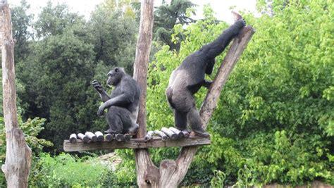 viale giardino zoologico bioparco turismo org