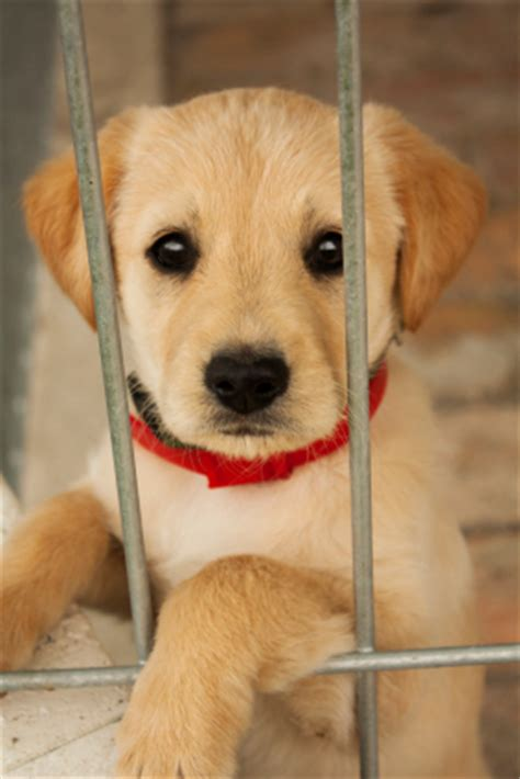 where can i adopt a puppy 10 reasons you should adopt a pet hooligans