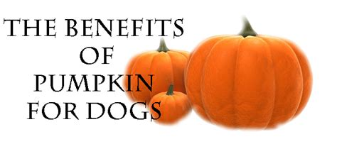 how much pumpkin to give a puppy how much pumpkin to give a for diarrhea