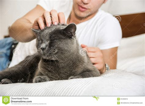 futon pflege handsome cuddling his gray cat pet stock photo