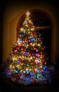 best lights for tree 25 best ideas about lights on