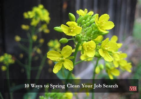 how to spring clean your closet tri county shopping mall in cincinnati 10 ways to spring clean your job search vincentbenjamin