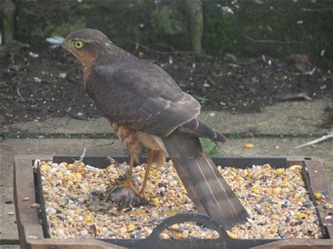 best 28 why are birds not from my bird feeder feeding
