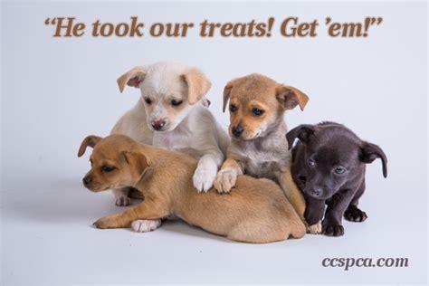 puppy captions puppy caption quot he took our treats get em quot central california spca fresno ca