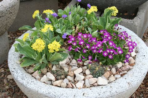 Rock Garden With Potted Plants Planting A Potted Rock Garden