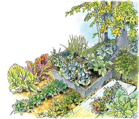 what garden vegetables like shade 151 best images about for my garden on garden fencing arbors and plants