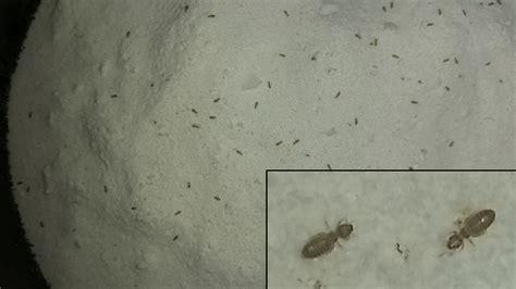 Kleine Schwarze Fliegen In Der Küche kleine tiere badezimmer weis jemand was das f 252 r kleine