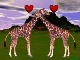 imagenes de jirafas tumblr gifs animados de jirafas