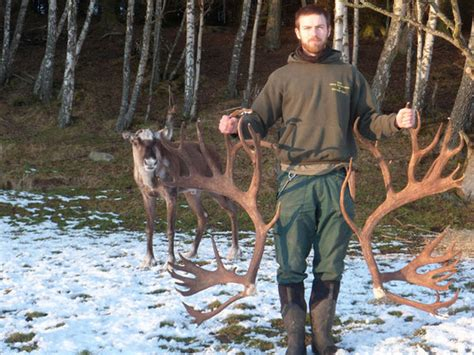 Reindeer Shed Antlers by What A Reindeer Looks Like Without His Antlers