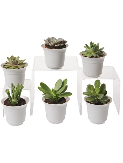 Succulent Planters For Sale by Succulent Terrarium Plant Collection Small Terrarium
