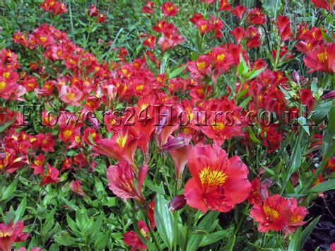 Garden Of Delivery Garden Of Delivery 28 Images Flowers Uk Garden Flowers