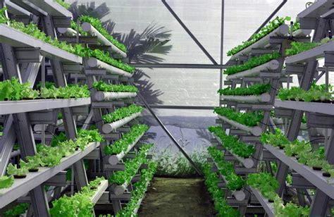 Pipa Paralon Untuk Tanaman Hidroponik vertical garden cara bercocok tanam dengan teknik