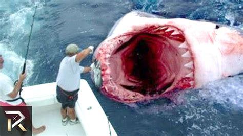 best shark attack fights shark and wins shark attack