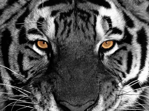 Colorful Kitchen Backsplash clemson tigers wallpaper wallpaper21 com