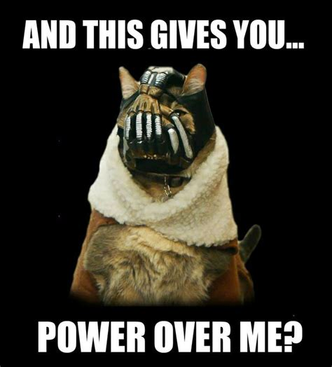 Bane Cat Meme - bane cat so effing funny hahaha close enough