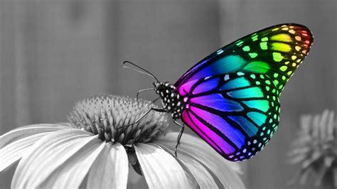 butterfly wallpaper for macbook 1920x1080 rainbow butterfly desktop pc and mac wallpaper