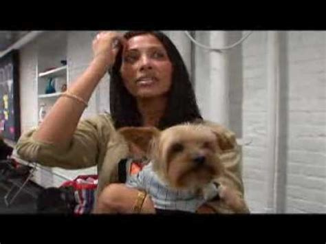 yorkie dogs 101 grooming a pet yorkie in the bottom trim part 2 funnycat tv