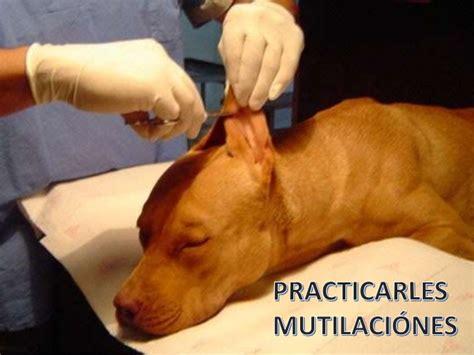 aviso este repaso al maltrato europeo a los refugiados maltrato animal
