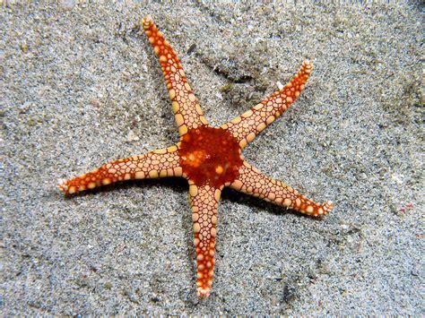 starfish images starfish