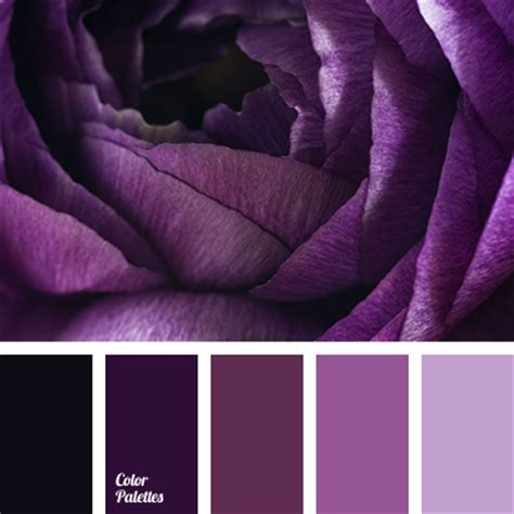 hues of purple dark purple and lilac color palette ideas