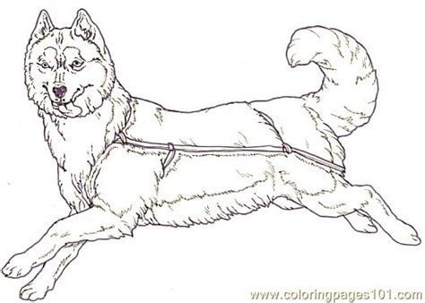 coloring pages mural tsb sled dog facing reverse animals