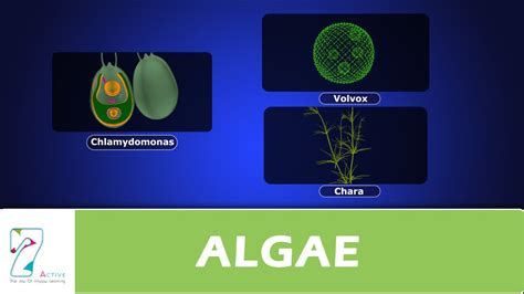 How To Start In Oxygen Not Included Algae Detox Cader by Algae