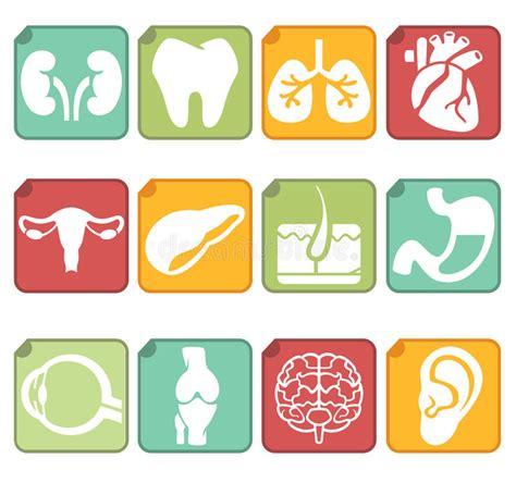 foto organi interni organi interni umani illustrazione di stock illustrazione