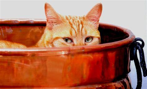 poste banco posta banco posta bufera su gatto in pentola nuova