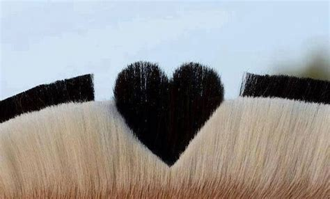 fjord mane manes and tails pinterest - Fjord Mane Designs