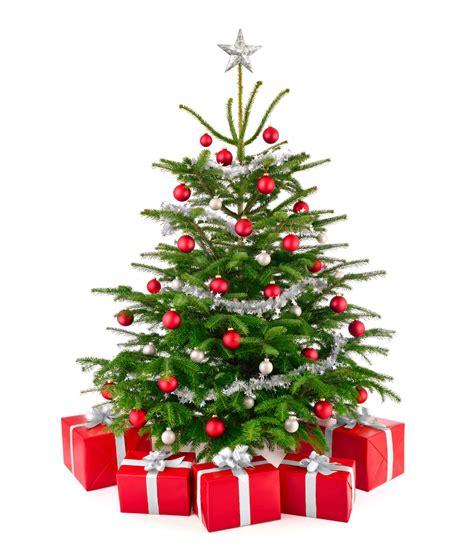 clipart christbaum nordmann tannen liegen vorne rhein westerwald news