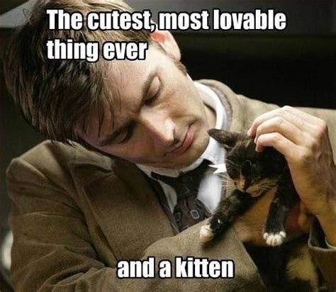 Doctor Who Cat Meme - most random thing ever memes