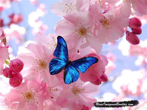 imagenes de flores bonitas para portada im 225 genes bonitas mariposa azul y flores rosas im 225 genes
