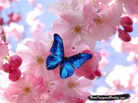 imagenes de mariposas bonitas animadas im 225 genes bonitas mariposa azul y flores rosas im 225 genes